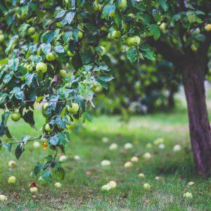 Low-hanging fruit